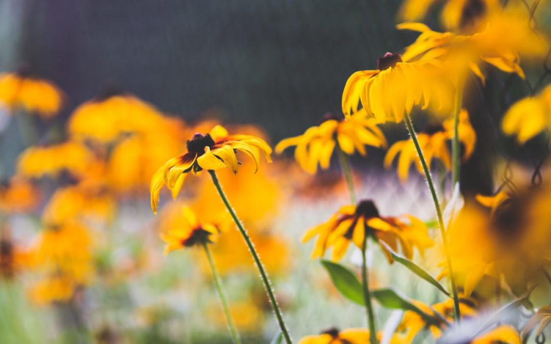 Żywe czy sztuczne kwiaty na cmentarz?